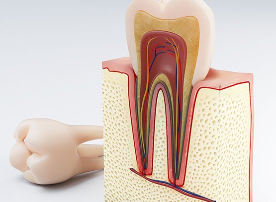 root canal treatment belmont wa